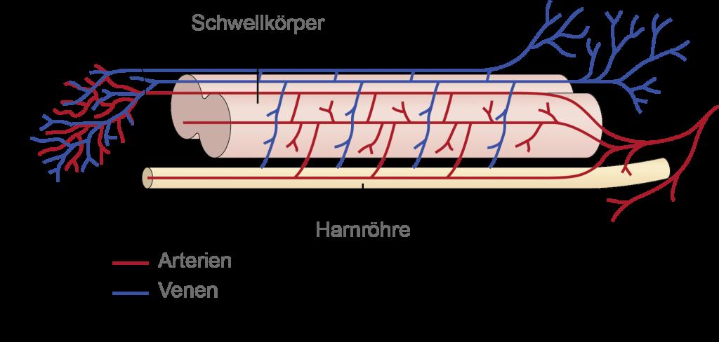 Grafik-Schwellkoerper
